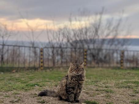 Опасностите пред една неваксинирана котка ?