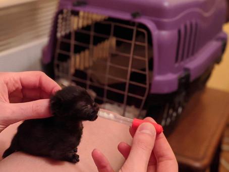 Отглеждане на новородено котенце