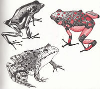 frog2c.jpg