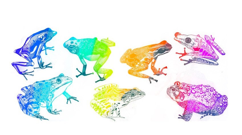 rainbow frogs.jpg