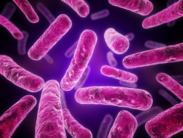 microbacterias.jpg