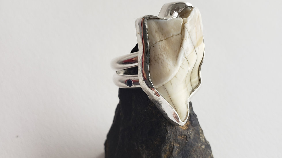 Moose Tooth and Montana Sapphire Ring