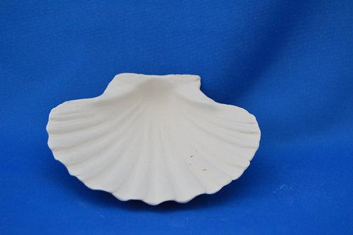 Scallop,  3B,  12x10  cms