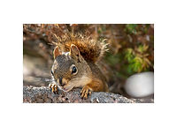 7x5 - squirrel.jpg