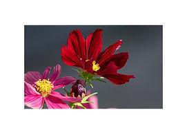 7x5 - Flowers.jpg