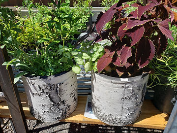 sign of the dragon potted plants 2.jpg