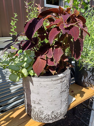 sign of the dragon potted plants.jpg