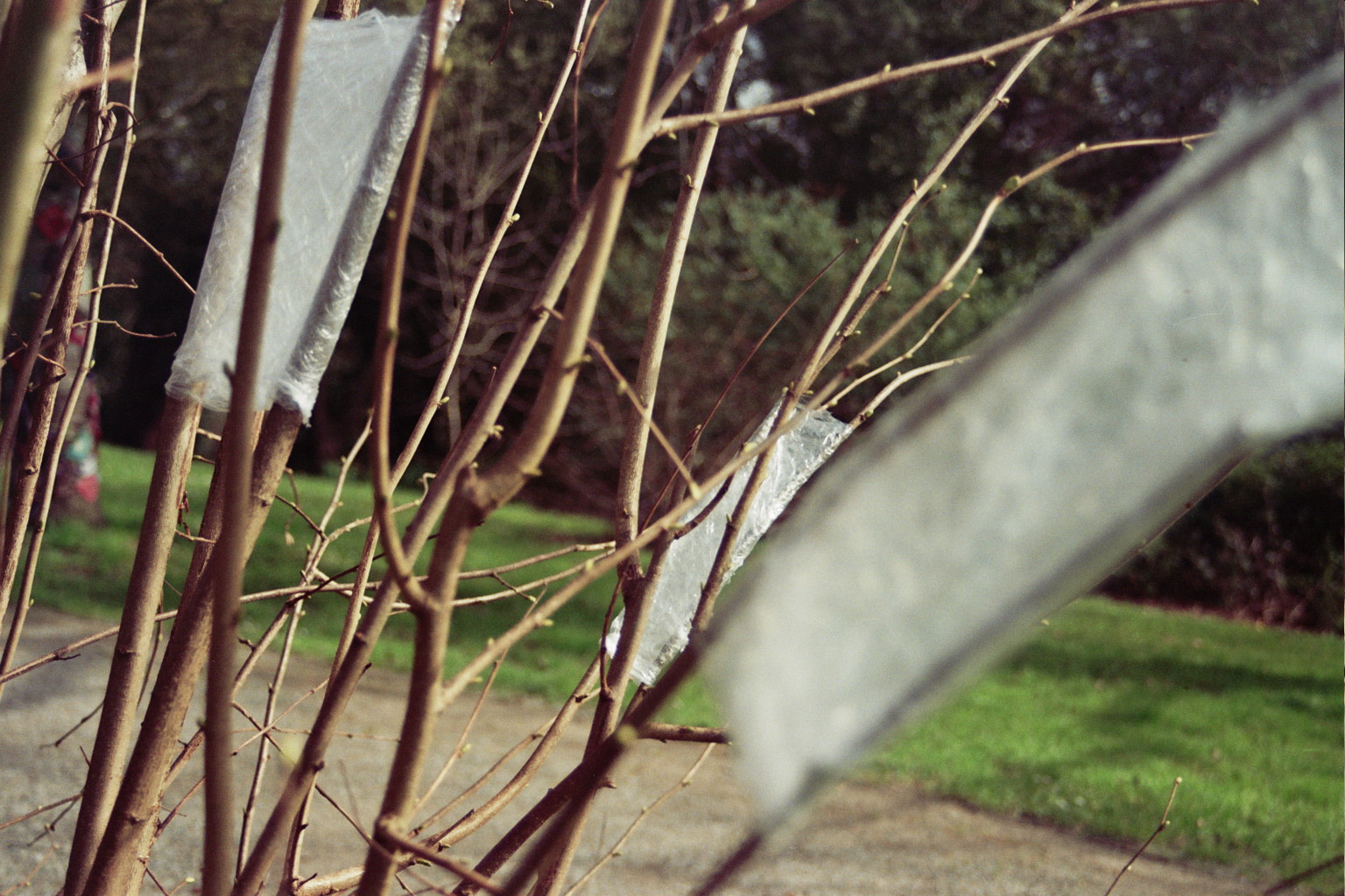 Prueba en árbol (1).jpg