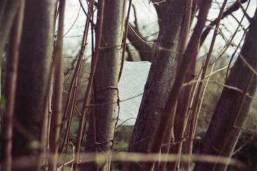 Prueba en árbol (5).jpg