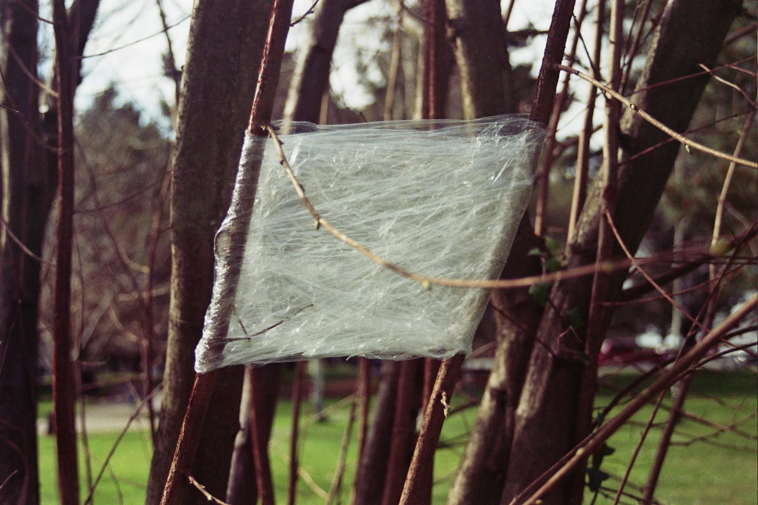 Prueba en árbol (4).jpg