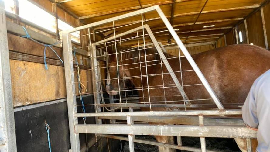 16 December Horses home.jpg