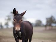 Ponies-33b.jpg