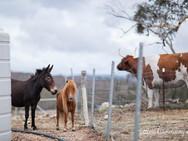 Ponies-13b.jpg