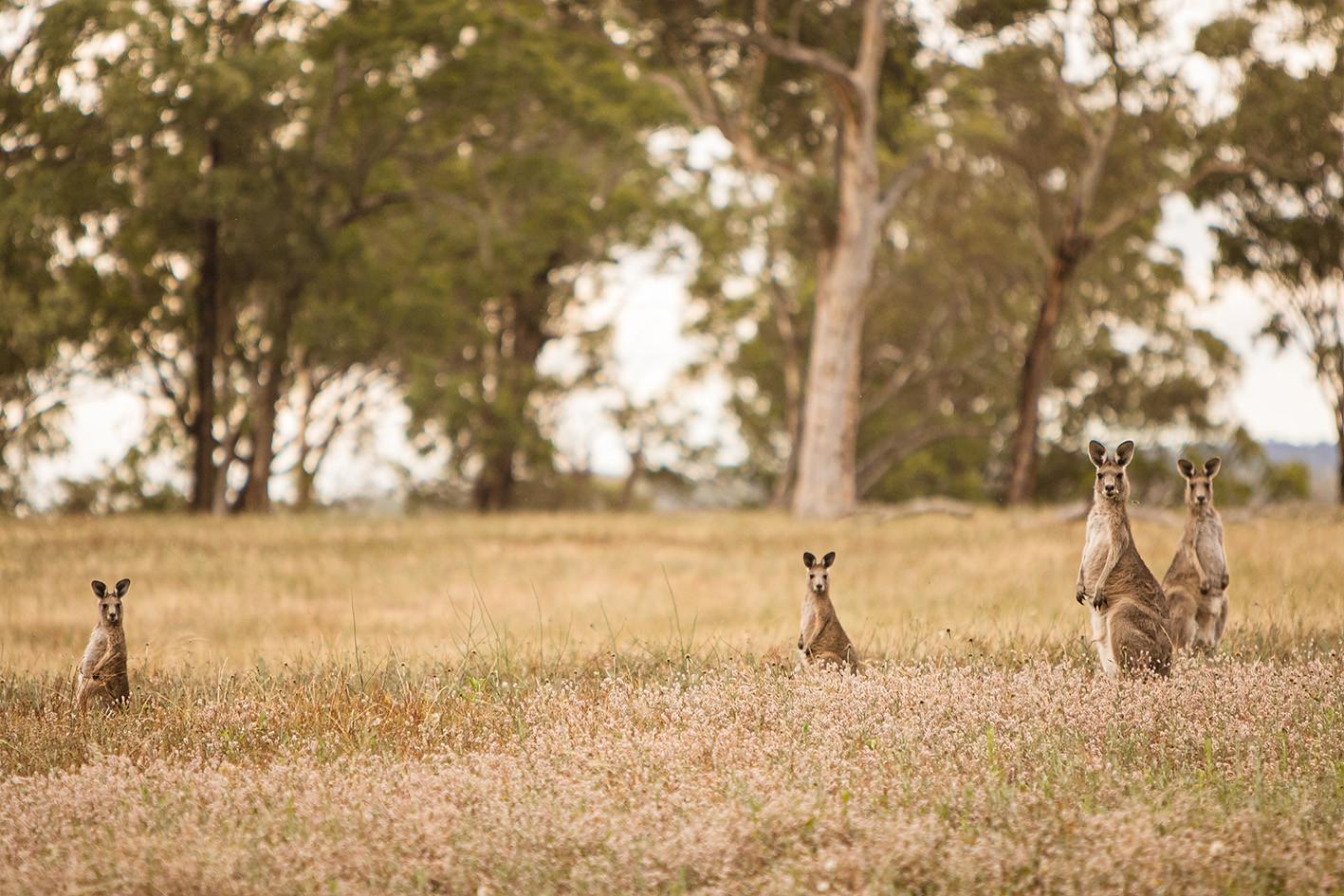 Wildlife at Little Oak