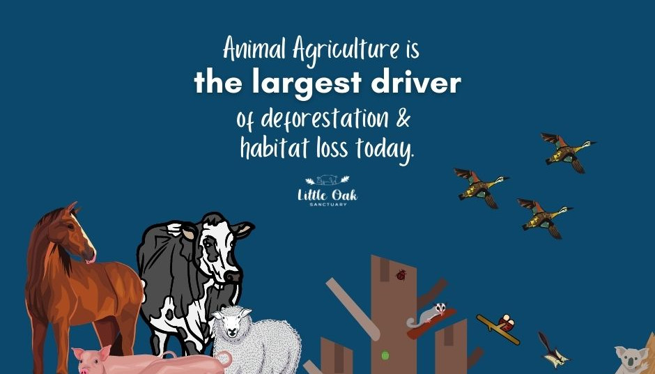 How does Animal Agriculture impact wildlife?