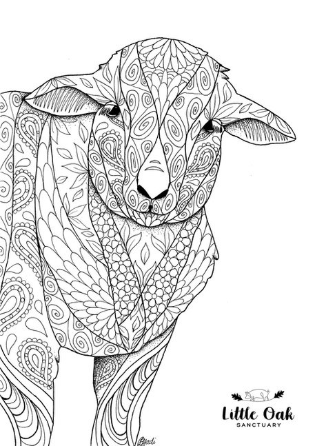 Sheep Colouring In Page