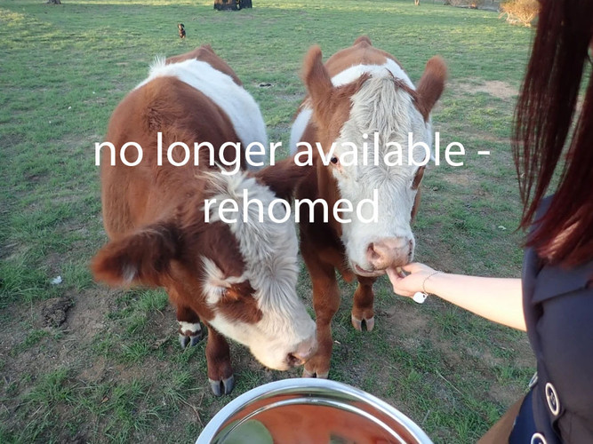 Rehomed