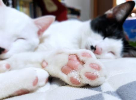 疲れたときの短い昼寝