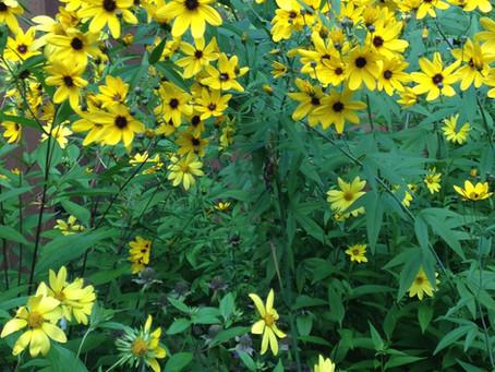 Cedar Waxwings, Aldo Leopold, and the Biotic Community