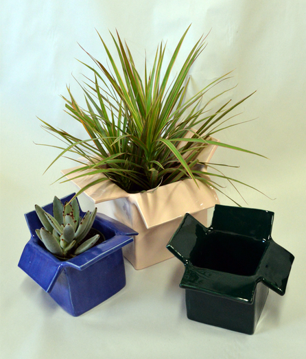 three plants for web.png
