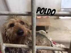 Poldo_edited
