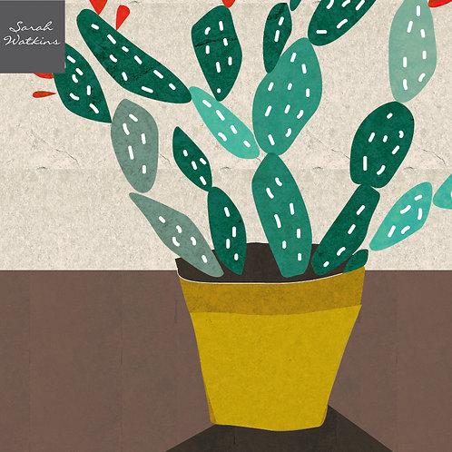 At Home (cacti)
