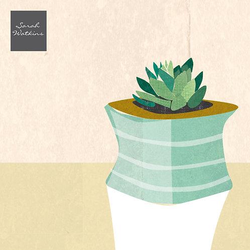 Plain Cacti