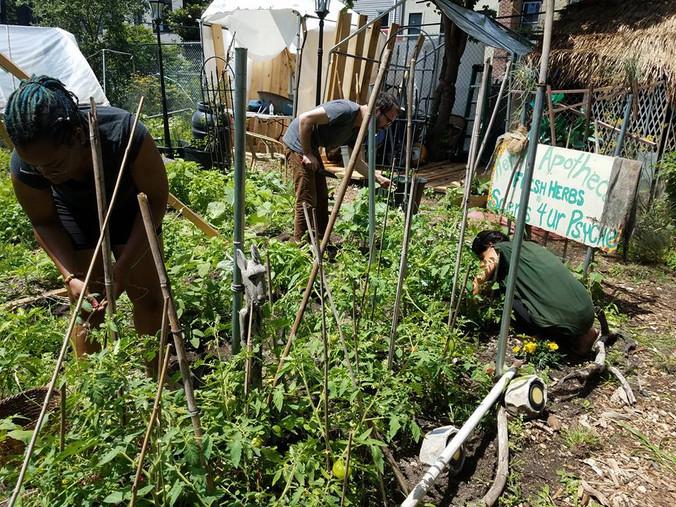 Garlic Harvest and Volunteer Orientation Reminder, July 13th 6pm - 9pm