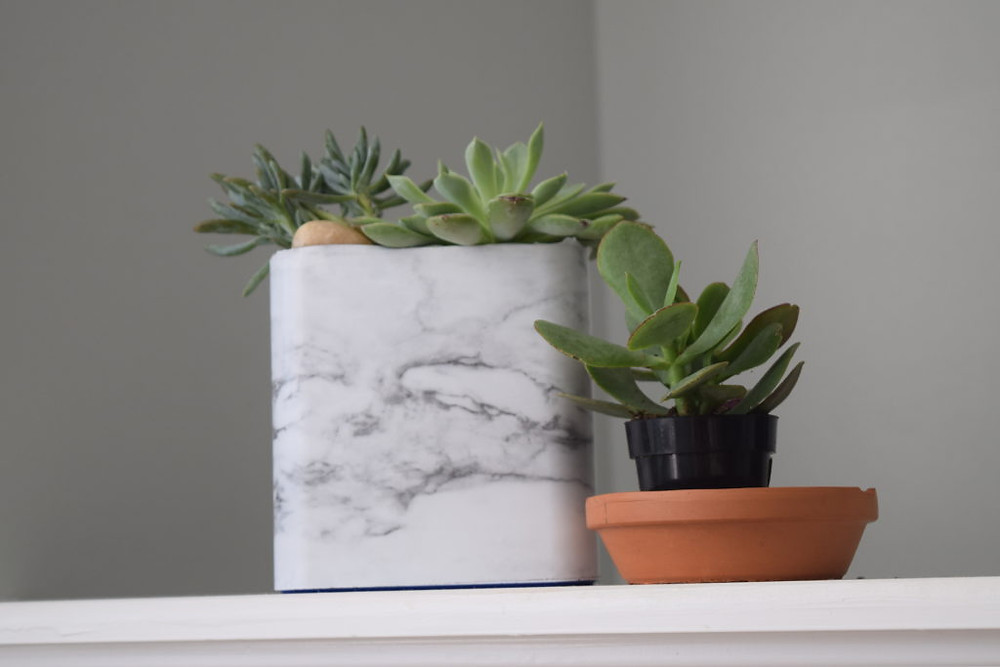 DIY Planter using recycled containers