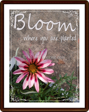 bloom where you are planted 1 framed