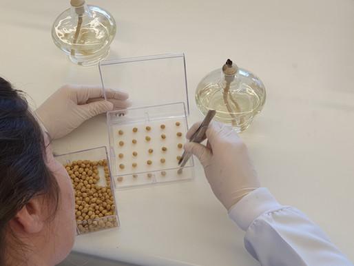 Estudo patológico sobre a diferença de sementes Com e Sem TSI!