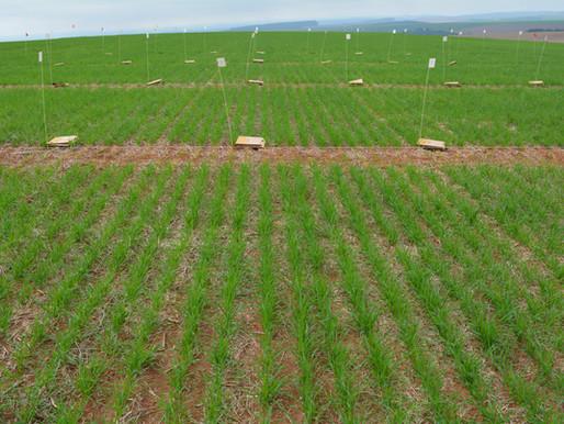 Interação de fungicidas sistêmicos e protetores com nutrientes no Trigo