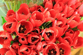 Red flowers, therapy, military, counseling, tulips