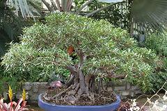 bonsai, tree, meditation, life coaching, therapy, counseling