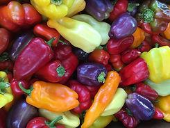 aug- sweet pepper.JPG