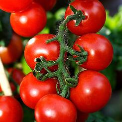 8517-FarmersMarket-Vine-Ripe-Tomato-Frag