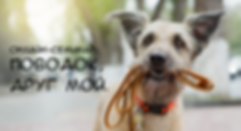leash-banner copy.png
