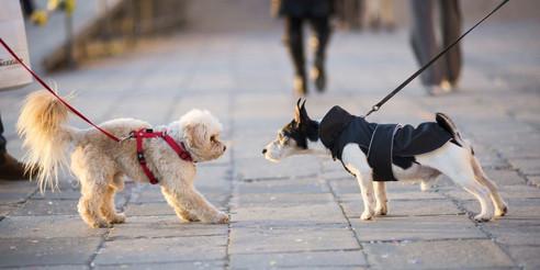 Dog-Training-Resources-Images.jpg