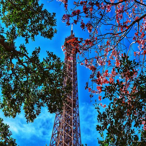Eiffeltårnet_og_vårblomster.jpg
