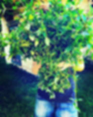 moon garden23.jpg