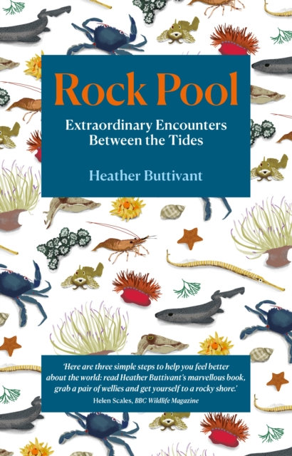 Rock Pool: Extraordinary Encounters Between the Tides : A Life -Long Fascination