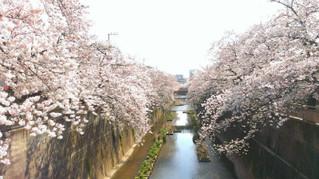 ★★★中板橋 桜 情報★★★