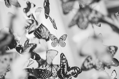 butterflies-black-and-white-9159.jpg