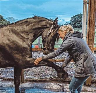 HORSE%20TREATMENT%202_edited.jpg