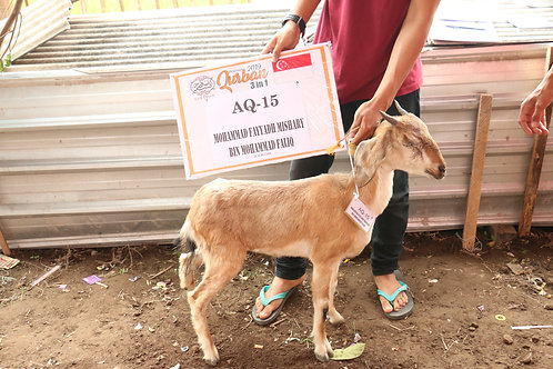 Aqiqah (Goat/Kambing)