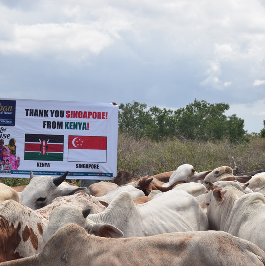 Selection Cows - Kenya Qurbani 2020 MAA