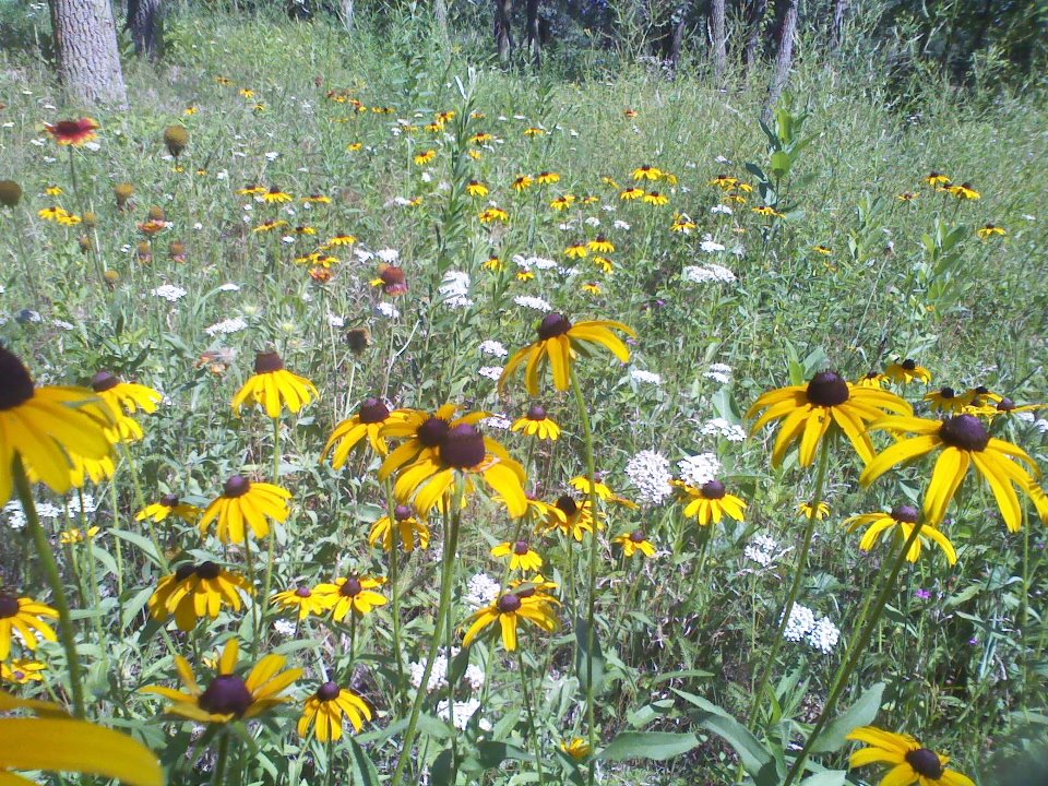 WILDFLOWERS ON THE PRAIRIE