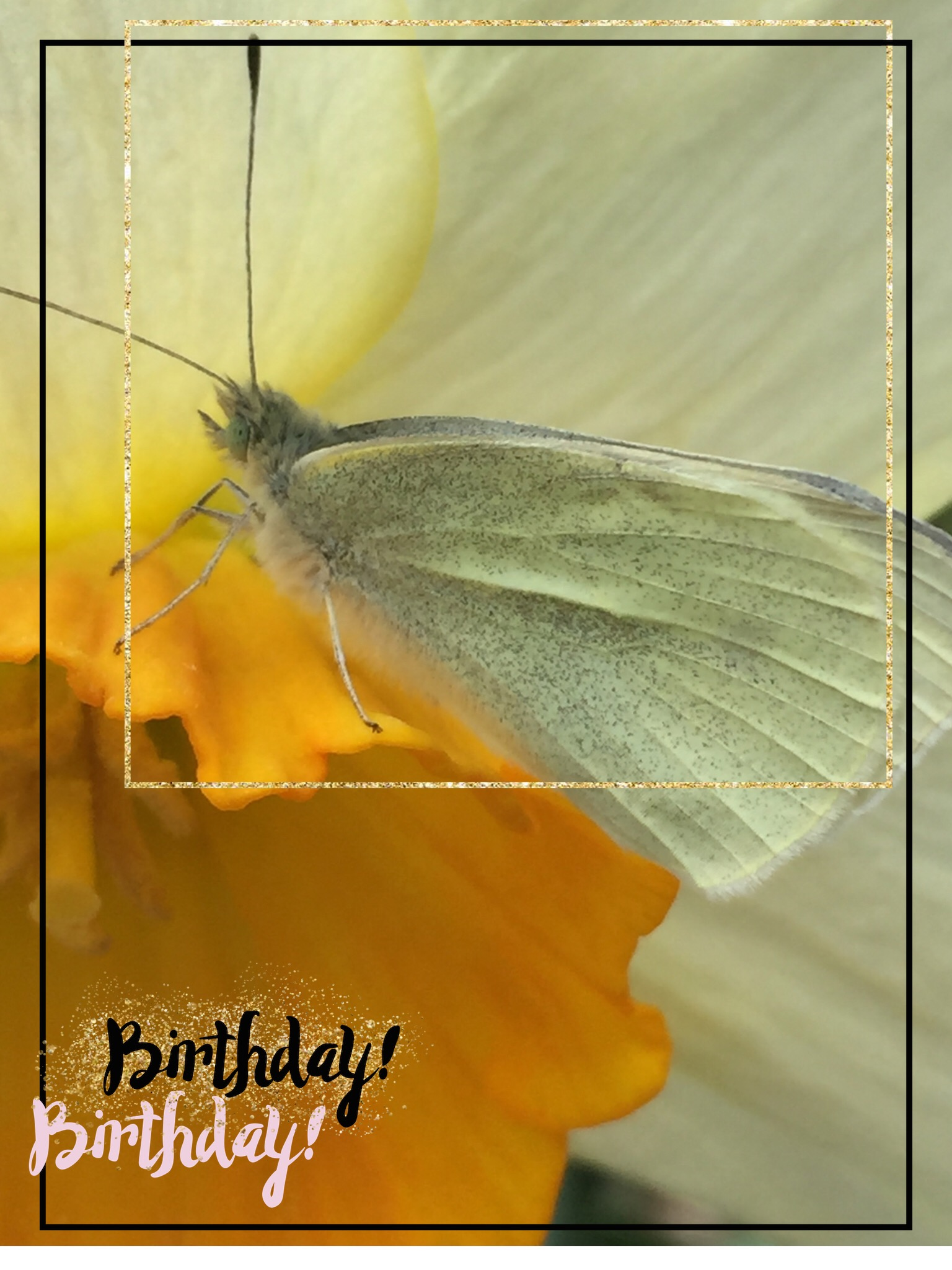 BUTTERFLIES AND BIRTHDAY WISHES