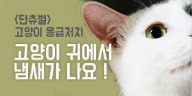 <단츄별>고양이 귀에서 냄새가 나요!