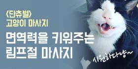 <단츄별>고양이 림프 마사지